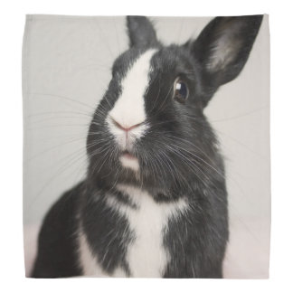 Adorable Black and White Bunny Rabbit Bandana