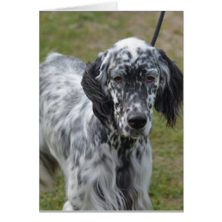 Adorable Black and White English Setter Greeting Card