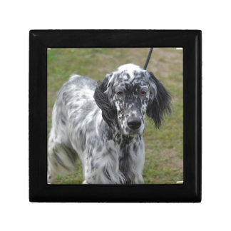 Adorable Black and White English Setter Small Square Gift Box
