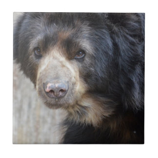Adorable Black Bear Tile