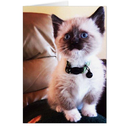 Adorable Blue Eyed Masked Kitten Photograph Card