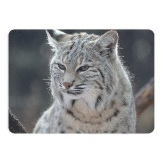 Adorable Bobcat 13 Cm X 18 Cm Invitation Card