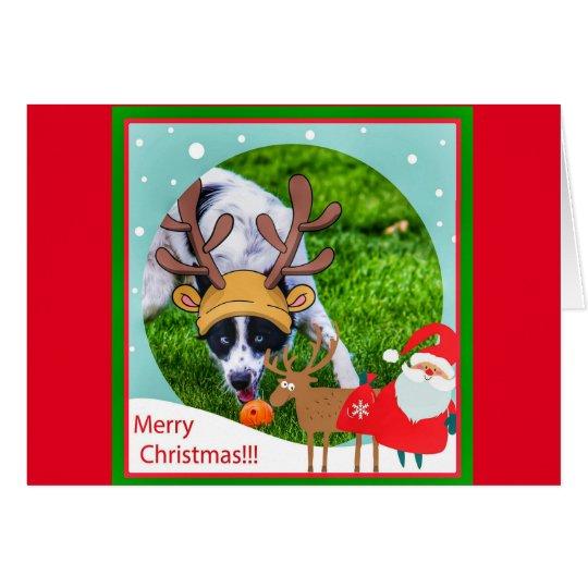 Adorable Border Collie funny christmas card