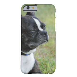 Adorable Boston Terrier Barely There iPhone 6 Case