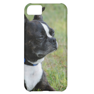 Adorable Boston Terrier iPhone 5C Case