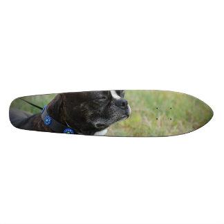 Adorable Boston Terrier Skate Boards