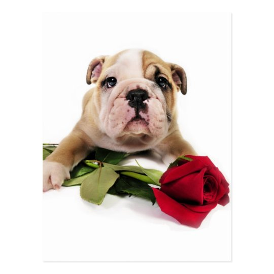 Adorable Brown and White Bulldog with Red flower