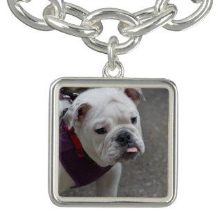 Adorable Bulldog