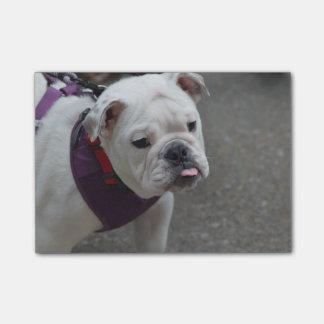Adorable Bulldog Post-it Notes