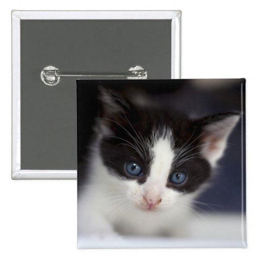 Adorable BW Kitten Button
