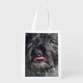 Adorable Cairn Terrier