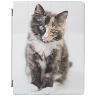 Adorable Calico Kitten iPad Cover