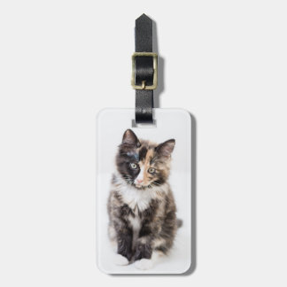 Adorable Calico Kitten Luggage Tag