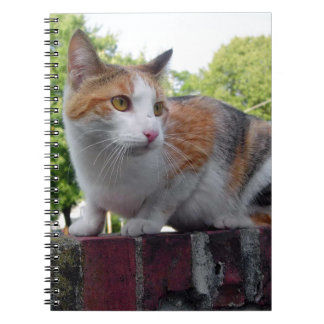 Adorable cat on red brick wall spiral note book