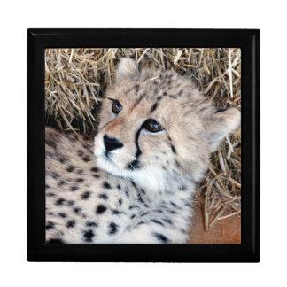 Adorable Cheetah Cub Photo Large Square Gift Box