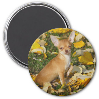 Adorable Chihuahua Puppy Between Yellow Leaves 7.5 Cm Round Magnet