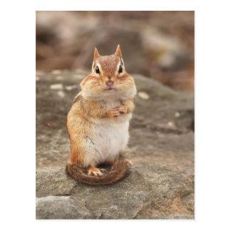 Adorable Chipmunk postcard