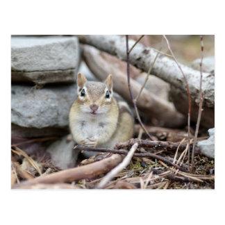 Adorable Chipmunk Smiling Postcard