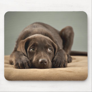 Adorable Chocolate Lab Puppy Design Mouse Mat