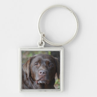 Adorable Chocolate Labrador Retriever Silver-Colored Square Key Ring