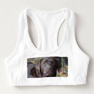 Adorable Chocolate Labrador Retriever Sports Bra