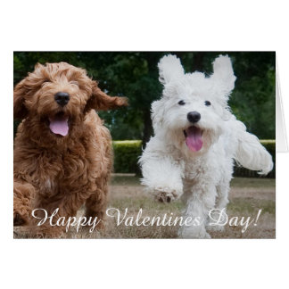 Adorable Cockapoo Puppies | Valentines Day Card
