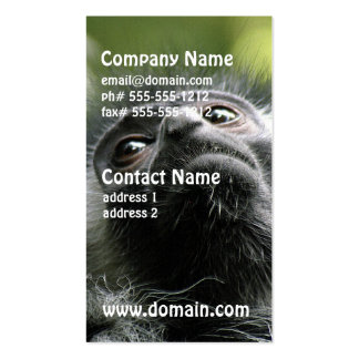 Adorable Colobus Monkey Business Card Template