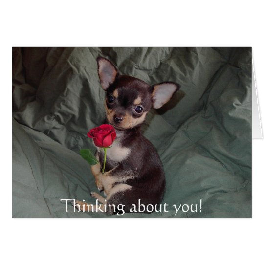 Adorable Cute Baby Chihuahua Merry Rose Card