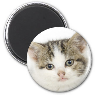 Adorable, cute cat / kitten 6 cm round magnet