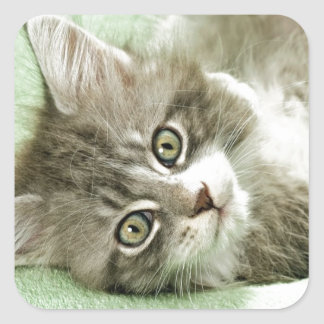 Adorable Cute Grey Tabby Kitten Paw Play Tapping Square Sticker