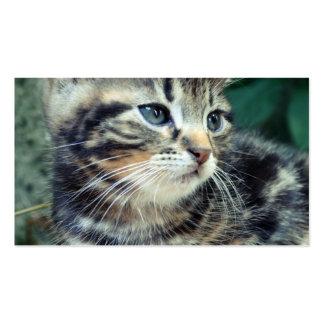 Adorable Cute Kitten Business Card Templates