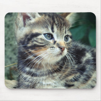 Adorable Cute Kitten Mouse Pads