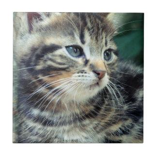 Adorable Cute Kitten Tile