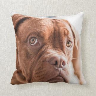 Adorable doggy cushion
