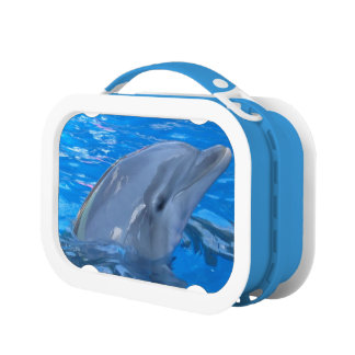 Adorable Dolphin Lunchboxes