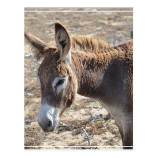 Adorable Donkey Postcard