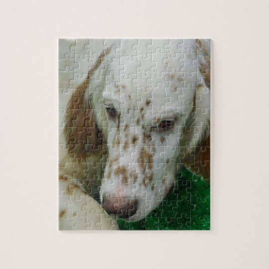 Adorable English Setter Jigsaw Puzzle