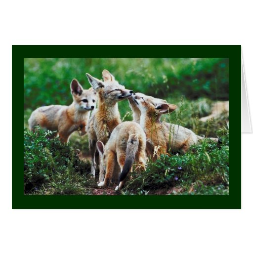 ADORABLE FOX FAMILY  HOLIDAY CARD