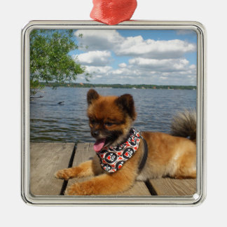 Adorable, furry dwarf spitz dog Silver-Colored square decoration