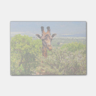 Adorable Giraffe Poking His Head Above The Trees Post-it Notes