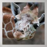 Adorable Giraffe Poster