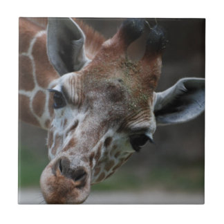 Adorable Giraffe Tile