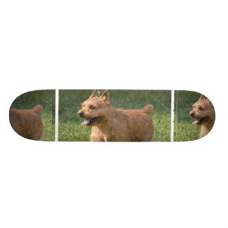Adorable Glen of Imaal Terrier Skateboard Decks