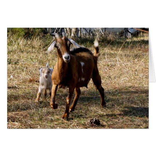Adorable Goats Card