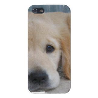 Adorable Golden Retrievers iPhone 5 Cases