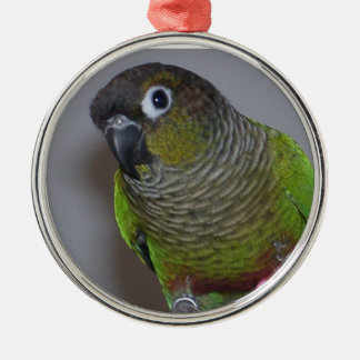 Adorable Greencheek Conure Christmas Ornament