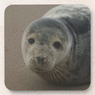 Adorable grey seal pup baby coaster