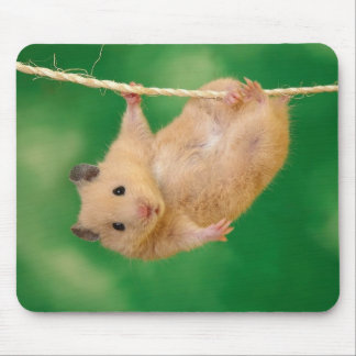 Adorable hamster mousepad