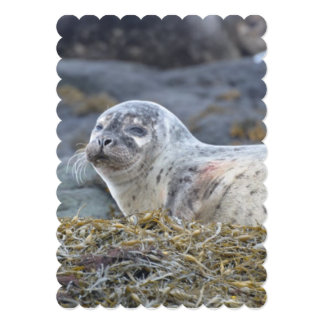 Adorable Harbor Seal 13 Cm X 18 Cm Invitation Card