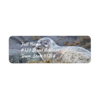 Adorable Harbor Seal Return Address Label